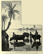 A SILHOUETTE ON THE NILE. A group of the slate-coloured buffaloes of the country being watered is one of the commonest sights on the Nile Wood engraving from 'Picturesque Palestine, Sinai and Egypt' by Wilson, Charles William, Sir, 1836-1905; Lane-Poole, Stanley, 1854-1931 Volume 4. Published in 1884 by J. S. Virtue and Co, London