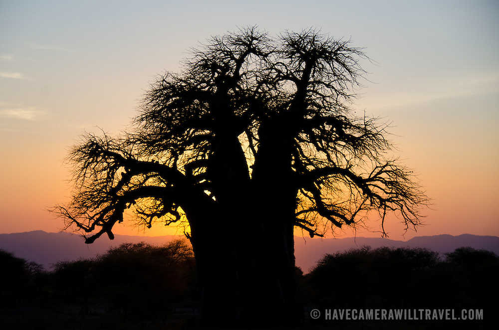 The setting sun casts its last rays to frame the silhouette of a baobab tree at Tarangire National Park in northern Tanzania not far from Ngorongoro Crater and the Serengeti.