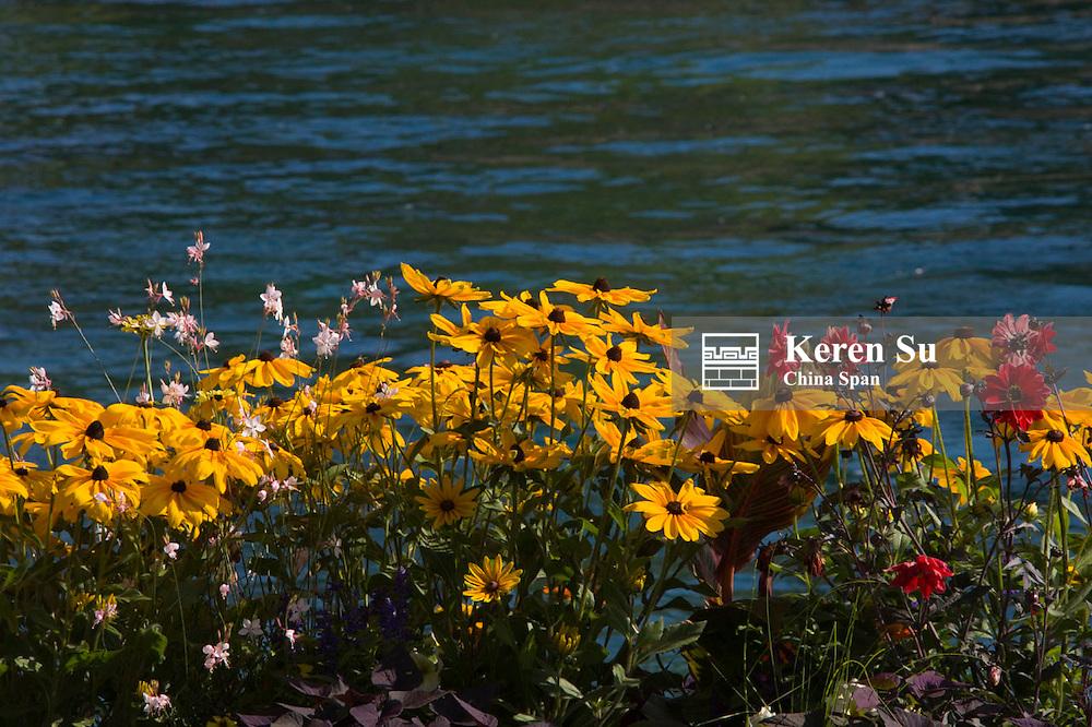 Flowers with Lake Geneva in downtown, Geneva, Switzerland