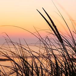 Dune grasses at Coast Guard Beach in the Cape Cod National Seashore. Eastham, Massachusetts.
