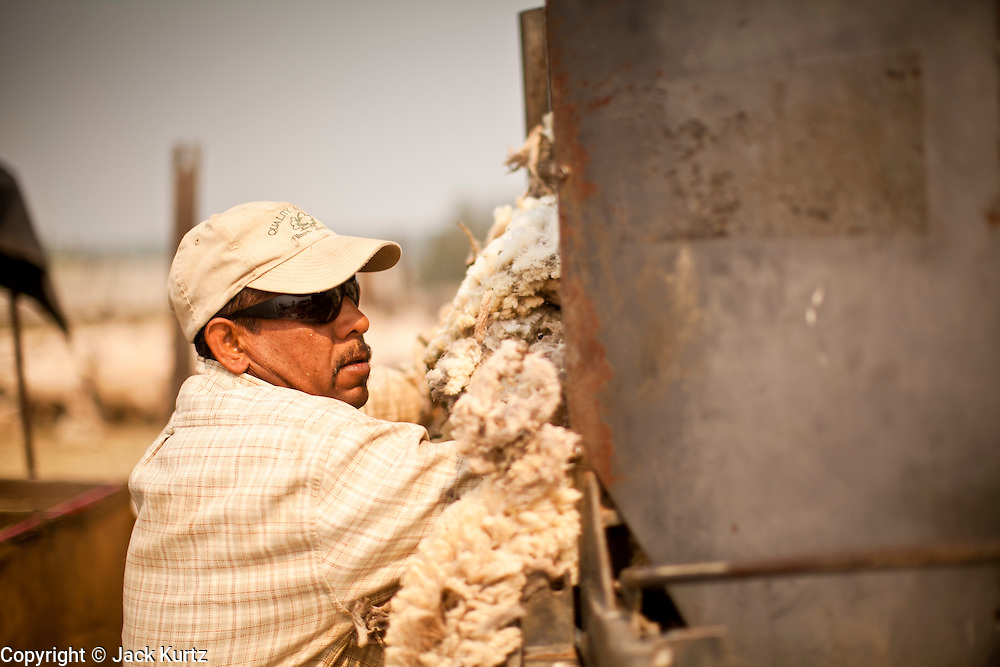 """05 JUNE 2011 - GREER, AZ: Felemon Perez (CQ) stuffs wool just shorn from sheep into a bundling machine at the Sheep Springs Sheep Co summer shearing camp northwest of Greer Sunday. Mark Pedersen (CQ), of Sheep Springs Sheep Co, said they drove about 2,000 sheep from Chandler up to their summer pastures near Greer. They were supposed to start shearing on Friday, but didn't start till Friday because of the Wallow Fire. They also run cattle on land southeast of the sheep pasture, closer to Greer. Pedersen said they were prepared to move both the cattle and the sheep if they had to. He said the biggest problem with the smoke was that it bothered the sheeps' lungs much the same way it bother people's lungs. The fire grew to more than 180,000 acres by Sunday with zero containment. A """"Type I"""" incident command team has taken command of the fire.  PHOTO BY JACK KURTZ"""