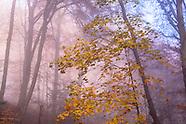 Waelder :: Forests