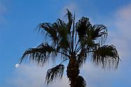 Palm tree, moon, and fog cloud at Laguna Beach, Orange County, California