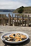 Chipotle Bourbon BBQ Oysters, Hog Island Oyster Company, Marshall, California