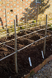 The dahlia bed in winter showing supporting structure and mounds of mulch protecting the dahlias