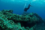 Scuba Diving Mala Pier, Maui Hawaii