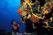 diver explores reef,<br /> Cozumel, Mexico, ( Caribbean Sea )<br /> MR 138