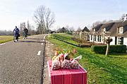 Nederland,Ooijpolder, 17-2-2019 Mensen, ouderen, maken een fietstochtje over de dijk langs de Waal, Rijn . Het is een mooie dag met zon en een blauwe onbewolkte lucht. Bewoners hebben walnoten uit eigen tuin langs de weg gezet. Ze zijn gratis mee te nemen.FOTO: FLIP FRANSSEN