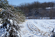 An early season snowfall blankets a havested corn field in Southeastern Iowa, the trees provide shelter for wildlife.