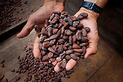 Costa Rica, La Virgen de Sarapiqui, Drying Cocoa Beans, Tirimbina Biological Reserve