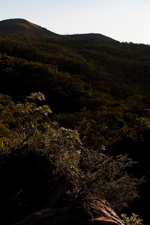 Rio Acima_MG, Brasil...Natureza no Condominio Tangara no municipio de Rio Acima. Na foto detalhe da vegetacao...The nature in Tangara condomminium in Rio Acima. In this photo detail of a vegetation...Foto: LEO DRUMOND / NITRO