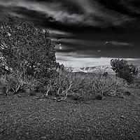 Phoenix Photo Shoot evening light with desert trees.
