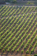 Vineyard. Caramany, Ariege, Roussillon, France