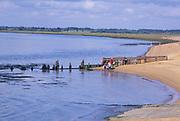 AYBPC9 Bawdsey Quay beach River Deben mouth Suffolk England