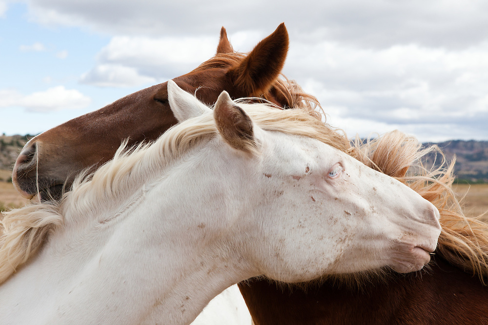 alan-winslow-horse-1.alan-winslow-horse-1.alan-winslow-horse-1.