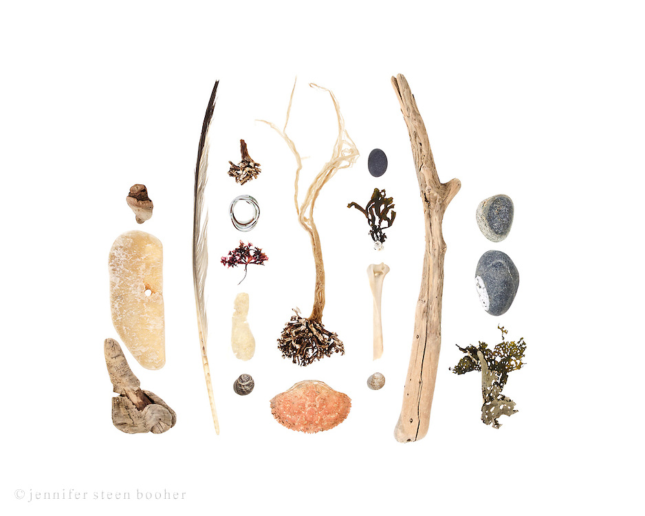 Top to Bottom, Left to Right: driftwood, weathered fiberglass, driftwood, feather, seaweed holdfast, plastic-coated wire, Irish Moss (Chondrus crispus). weathered fiberglass, Common Periwinkle (Littorina littorea), seaweed with holdfast, Jonah Crab (Cancer borealis), beach stone, Fucus sp. attached to barnacle (Semibalanus balanoides), bird bone, Common Periwinkle, driftwood, beach stones, seaweed (some kinf of kelp) partially covered with bryozoan colony.