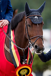 Geerts Geoffrey, BEL, Presley 2G VH<br /> BK Young Horses 2020<br /> © Hippo Foto - Sharon Vandeput<br /> 6/09/20