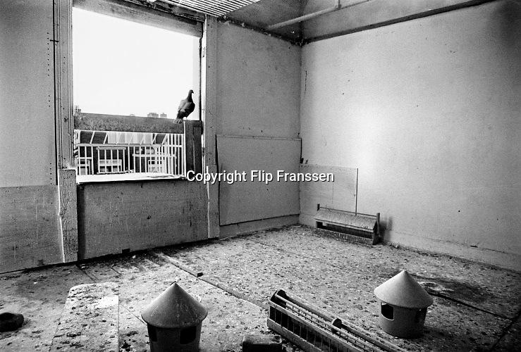 Nederland, Nijmegen, 27-1-1981In 1980 - 1981maakte ik een impressie in dit Nijmeegse buurtje, aan de rand van volkswijk het Waterkwartier, tussen de Weurtseweg en het slachthuis en Honig bij de Waalhaven.Ik  woonde enkele jaren in de Marsstraat, die particulier bezit is.De andere straten zijn de Dijkstraat, Pater van Hoofstraat,Lijnbaanstraat en de rechterkant van de  Weurtseweg.Het waren de eerste woningwetwoningen van Nijmegen, gebouwd in 1914 . gezonde woningen werden ze genoemd .en er kwamen veel mensen te wonen uit de verpauperde Benedenstad van Nijmegen.Een homogeen buurtje waar, als het weer en temperatuur het toeliet, het leven zich opstraat afspeelde. Deze bewoner had een duivenhok, duiventil, in een van de slaapkamers van zijn huis .Buurtbewoners in een volksbuurt.Dit buurtje was administratief bekend onder de naam Weurt1, en erspeelde rond 1980 een strijd tussen de woningbouwvereniging Nijmegenen het buurtcomité over renovatie dan wel sloop van de buurt.Dankzij de inzet van die bewonersgroep werd het renovatie van dekarakteristieke woningen aan de Weurtseweg en op termijn sloop en socialenieuwbouw voor de andere straten.  Dat gebeurde in 1985.De huidige  huizen mogen tot 2020 blijven staan, maar worden daarnawaarschijnlijk gesloopt en het gebied wordt onderdeel van het Westelijk Waalfront wat nu al vorm krijgt. Foto: Flip Franssen