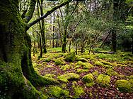 Photographer: Chris Hill, Troc Waterfall Killarney National Park, Kerry