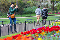 © Licensed to London News Pictures. 16/04/2018. London, UK. A man takes photos of brightly coloured flowers in the sunshine as the UK is set to experience warm weather of up to 25 degrees celsius this week. Photo credit : Tom Nicholson/LNP