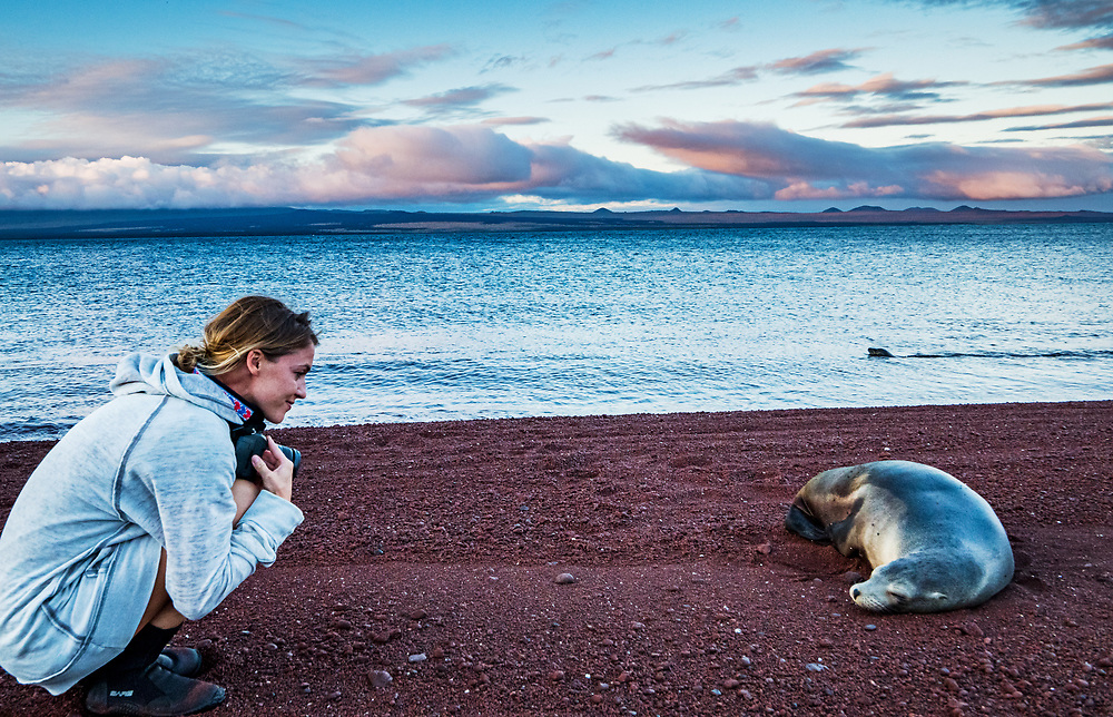 A tourist admires a Galapagos Sea Lion (Zalophus wollebacki) resting on a red sand beach at sunset on North Seymour Island, Galapagos, Ecuador.