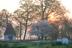 Spring in the orchard at Sissinghurst Castle Garden at dawn. Beehives, the Gazebo and dovecote