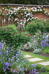 The rose garden at Mottisfont with stepping stone path. Rosa 'Assemblage des Beautés' and Rosa 'Reine Victoria' in a border with campanulas and nigella. Rosa 'Francis E. Lester' on the wall
