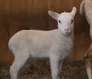 Fat Sheep Farm