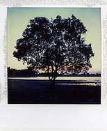 Silhouette of a tree growing on the rocky shore in salt water, Palawan Island, Philippines, Southeast Asia