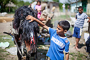 Young boy strokes a horse in the Roma area of Frumusani.
