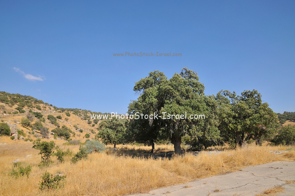 Israel, southern Golan Heights, landscape