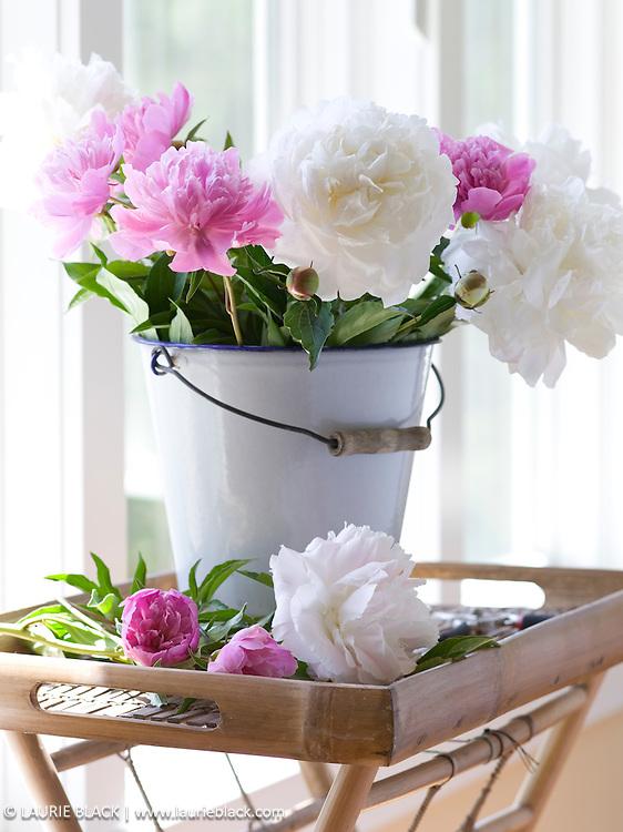 Peonies in white bucket