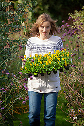 Carrying a tray of winter bedding - violas - ready to plant out