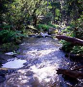 River flowing through temperate rainforest, near Lorne, Victoria, Australia