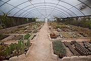 Cactus Garden, Ajijic, Lake Chapala, Jalisco, Mexico