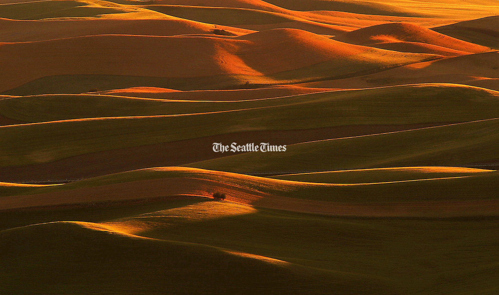 Rays of the setting sun wrap around the slopes of wheat fields on the Palouse in Eastern Washington, viewed from Steptoe Butte.  (Tom Reese / The Seattle Times)