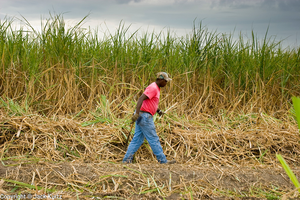 14 NOVEMBER 2005 - FRANKLIN, LA: ROGER GABRIEL, a worker on Jesse Breaux' sugar cane farm, stacks cut cane while working the cane harvest during the 2005 sugar cane harvest. Louisiana is one of the leading sugar cane producing states in the US and the economy in southern Louisiana, especially St. Mary and Iberia Parishes, is built around the cultivation of sugar. Statewide, more than 460,000 acres of land is cultivated with sugar cane and more than 27,000 people work in the sugar industry in Louisiana. Sugar growers in the area are concerned that trade officials will eliminate sugar price supports during upcoming trade talks for the proposed Free Trade Area of the Americas (FTAA). They say elimination of price supports will devastate sugar growers in the US and the local economies of sugar growing areas. They also say it will ultimately lead to higher sugar prices for US consumers.   PHOTO BY JACK KURTZ