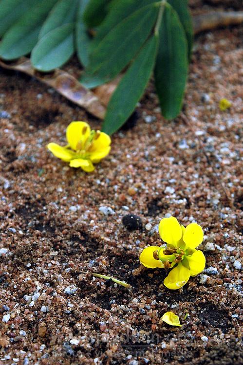 Ghana, Adaklu, Titikope, 2007. Ghana's sub-tropical temperatures and warm breezes help a profusion of plant life thrive.