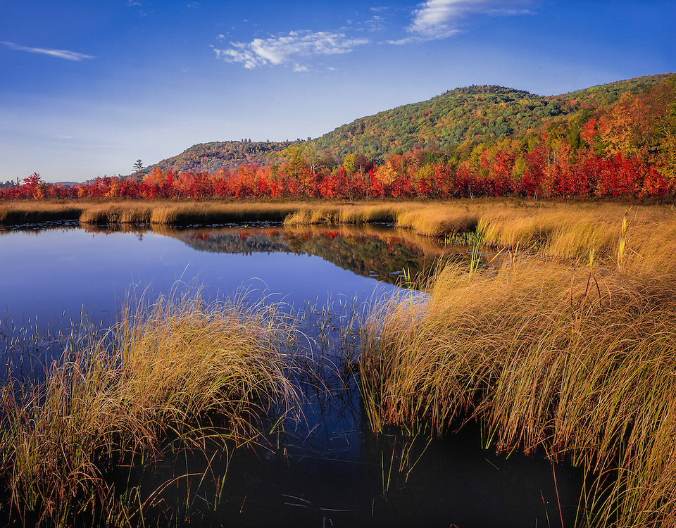 George Pond in fall, wetlands, marsh grasses, wild cranberry bog & red maple trees, Enfield Wildlife Management Area, Enfield, NH