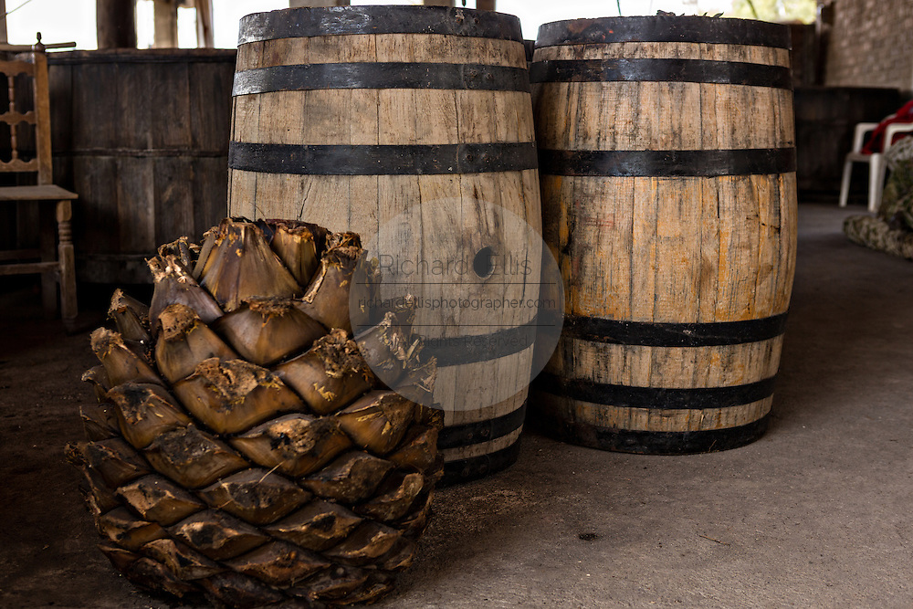Wooden barrels filled with agave mash an artisanal Mezcal distillery November 5, 2014 in Matatlan, Mexico. Making Mezcal involves roasting the blue agave hearts, crushing it and then fermenting the liquid.