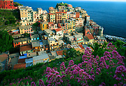"""Manarola is a small town, a frazione of the comune (municipality) of Riomaggiore, in the province of La Spezia, Liguria, northern Italy. It is the second smallest of the famous Cinque Terre towns frequented by tourists. Manarola may be the oldest of the towns in the Cinque Terre, with the cornerstone of the church, San Lorenzo, dating from 1338. The local dialect is Manarolese, which is marginally different from the dialects in the nearby area. The name """"Manarola"""" is probably dialectical evolution of the Latin, """"magna rota"""". In the Manarolese dialect this was changed to """"magna roea"""" which means """"large wheel"""", in reference to the mill wheel in the town. Manarola's primary industries have traditionally been fishing and wine-making. The local wine, called Sciacchetrà, is especially renowned; references from Roman writings mention the high quality of the wine produced in the region. In recent years, Manarola and its neighboring towns have become popular tourist destinations, particularly in the summer months. Tourist attractions in the region include a famous walking trail between Manarola and Riomaggiore (called Via dell'Amore, """"Love's Trail"""") and hiking trails in the hills and vineyards above the town. Manarola is one of the five villages. Mostly all of the houses are bright and colourful. Manarola was celebrated in paintings by Antonio Discovolo (1874-1956)"""