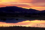Brids in pond near Rodman Slough at sunset, near Nice, Clear Lake, Lake County, California