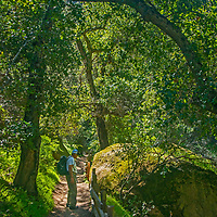 A hiker walks along the Moses Spring Trail in Pinnacles National Monument, San Benito County, California.