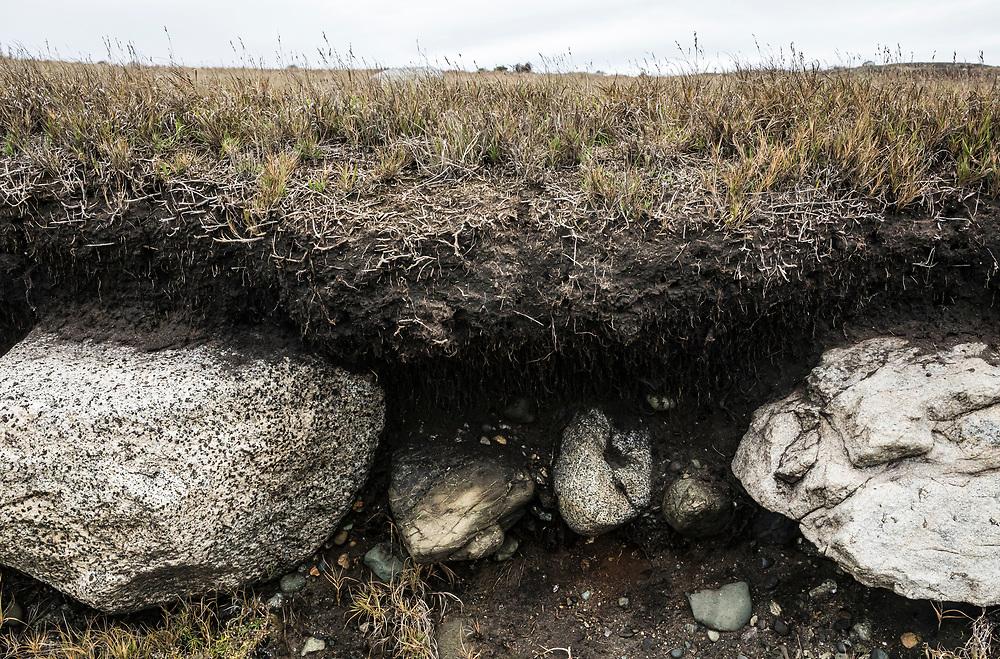 A cut-away / eroded portion of where the prairie / grassy fields meets the shoreline along the Strait of Juan de Fuca - American Camp National Historical Park, San Juan Island, Washington, USA.