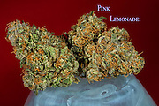 Pink Lemonade nug photo shot in a professional photography studio.