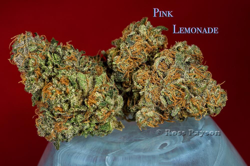 Pink Lemonade nug photo shot in a professional photography studio.
