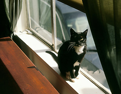 Zuzu the cat sits in the window of her Oakland, Calif. home, April 2006. (Photo by D. Ross Cameron)