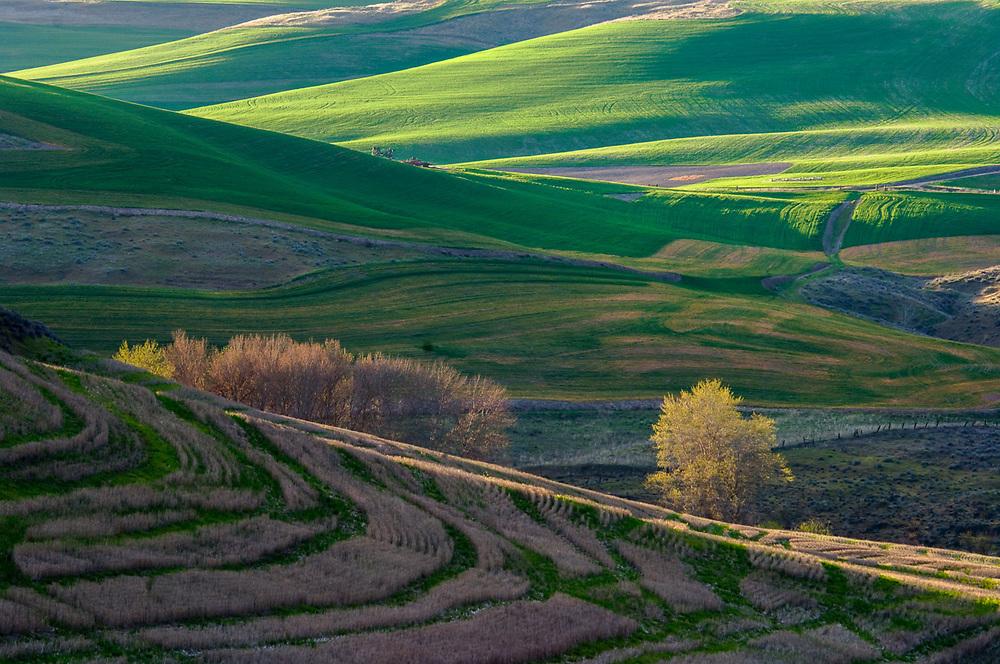 Agricultural field, afternoon light, April, Columbia River Basin, Washington, USA