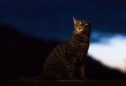 THEMENBILD - ein getigerter Kater auf einem Balkon bei Sonnenuntergang, aufgenommen am 29. Mai 2018 in Österreich // a tabby tomcat on a balcony during sunset, Austria on 2018/05/29. EXPA Pictures © 2018, PhotoCredit: EXPA/ JFK