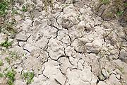 Nederland, Ooij, 27-5-2020 Opgedroogde klei, grond. Door de aanhoudende en langdurige droogte en regentekort dreigt er nu alweer een watertekort voor de landbouw . Foto: Flip Franssen